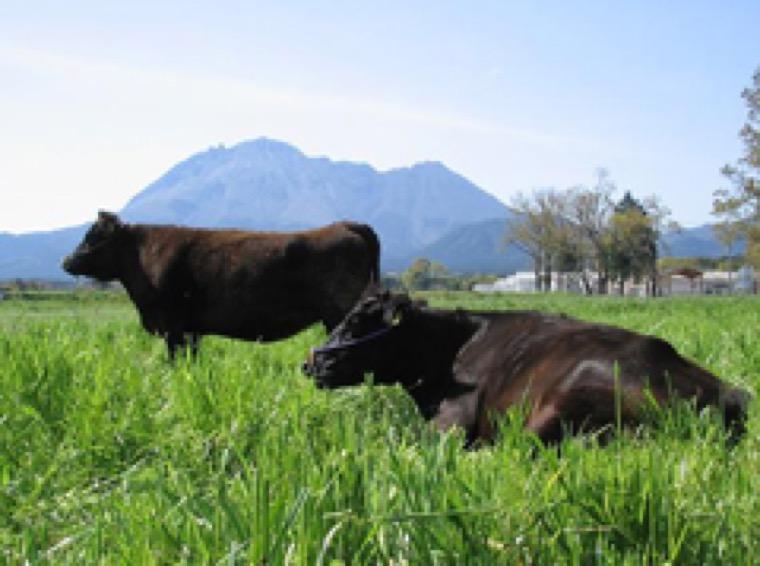牛の生産性向上を目指した発情検出器の研究開発