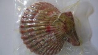 対馬産ヒオウギ貝の商品開発・販路開拓