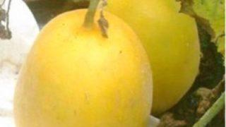 規格外果実を活用したフルーツデザートの開発と販路開拓