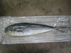 低利用魚のすり身化とその副産物を活用した機能性練製品の開発