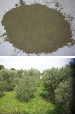 雲仙産の無農薬・自然農法で栽培したオリーブ葉を活用した 加工商品開発及び販路開拓