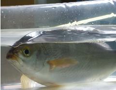 全国を対象にした、小ロット対応可能な新形態での活魚販売